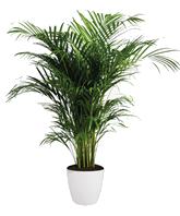 Plant 1 - $300