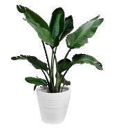 Plant 1 - $200