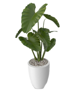 Plant 1 - $150